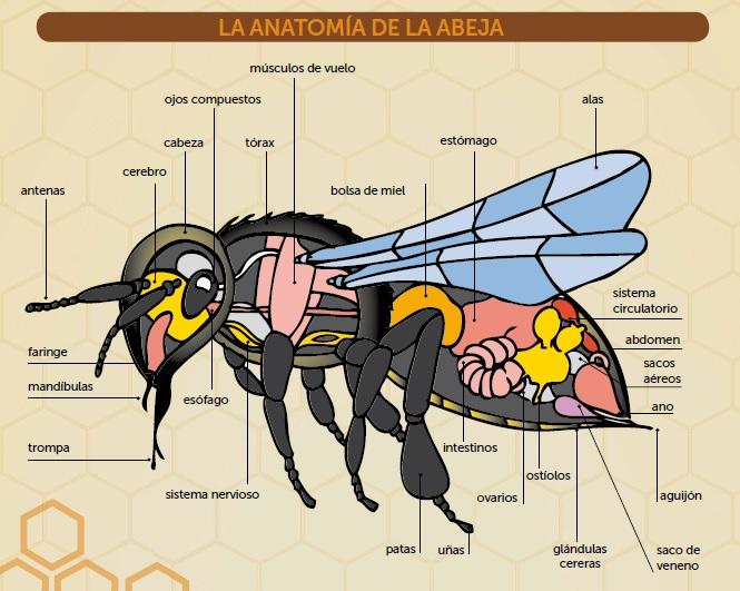 La Abeja - Asociación de Apicultores de la Región de Murcia