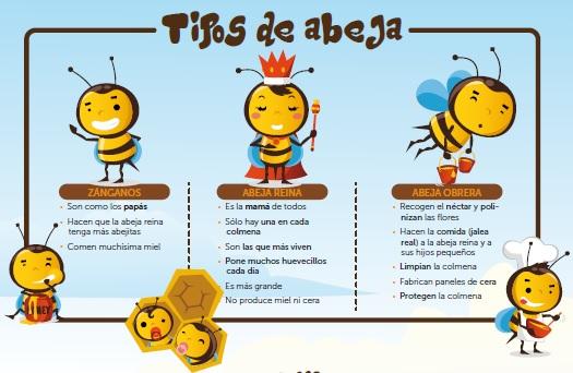 Image: Tipos de Abejas - Asociación de Apicultores de la Región de Murcia